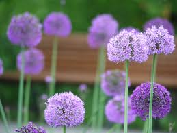 Decorative Flowers by Free Images Purple Petal Herb Flora Flowers Decorative