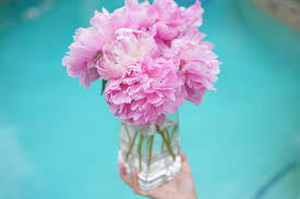 where to buy peonies what to buy and not to buy at trader joe s hello gorgeous by
