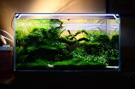 natural modern design of the large modern fish tank that has black