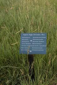 planting native grasses bladerunner farms grows habiturf native grass sod