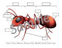 ant anatomy cut u0026 paste worksheet gift of curiosity
