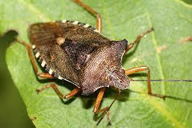 wanzen nabu insekten spinnen nabu aktivitäten
