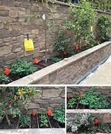 garden border ideas information database