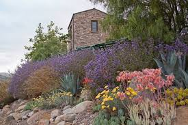 Drought Friendly Landscaping by Drought Tolerant Landscape Design Photo Gallery