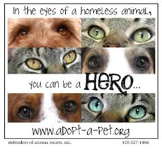 defenders of animal rights inc
