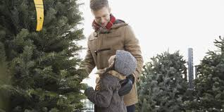 Fraser Christmas Tree Permit by The Most Famous Tree Man In New York Huffpost