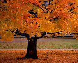 mabon the autumn equinox also known as harvest home and the