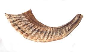 horn shofar ram horn shofar light brown color half 12