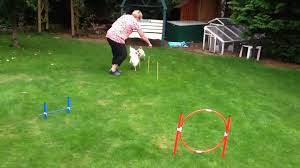 pug fails to jump over obstacle course jukin media