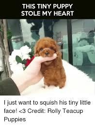 Puppy Memes - 25 best memes about teacup puppy teacup puppy memes