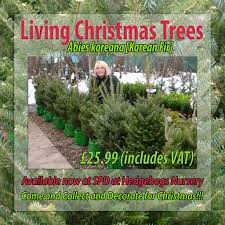 living christmas trees from spd at hedgehogs nursery hedgehogs