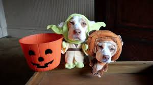 dogs in costumes go trick or treating on halloween cute dogs