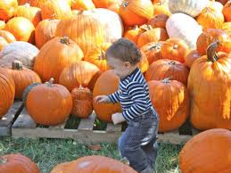 does spirit halloween take checks mapping greater new orleans area pumpkin patches