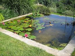 Backyard Bassin - bassin by english garden group on flickr would love to have a