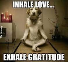 Gratitude Meme - love and gratitude by tm 10 2 17 intel