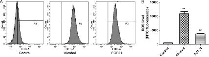 fgf21 treatment ameliorates alcoholic fatty liver through
