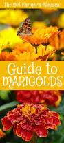 Farmers Almanac Florida Best 25 Farmers Almanac Ideas On Pinterest U Of U Companion