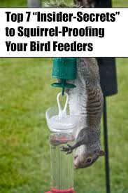 how to keep birds away from patio best 25 squirrel proof bird feeders ideas on pinterest caged