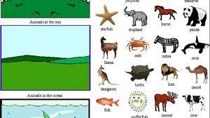 animal adaptations lesson plans 4th grade elipalteco