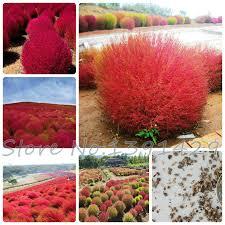 aliexpress buy grass seeds perennial 100pcs grass burning