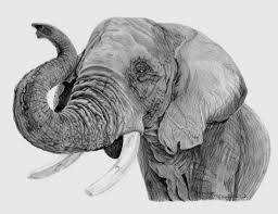 realistic elephant drawing 1000 images about gma on pinterest barn