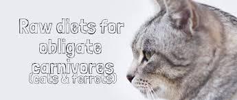raw feeding cats u0026 ferrets u2013 the raw feeding community