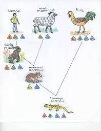 behavioral test examine evolution color vision