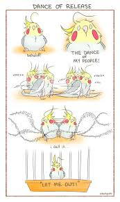 cartoon cockatiel 223 best cockatiel stuff images on pinterest parrots pet birds