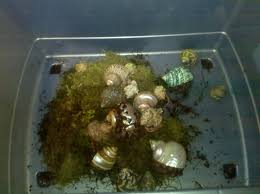 what kind of moss is safe for hermit crabs