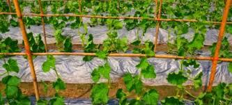 the best mulch for a vegetable garden doityourself com
