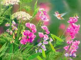 Hummingbird Flowers Hummingbird Tag Wallpapers Summer Hummingbird Flowers Moth July