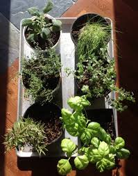 grow in winter part 1 herbs