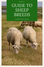 369 best livestock images on pinterest farm animals livestock