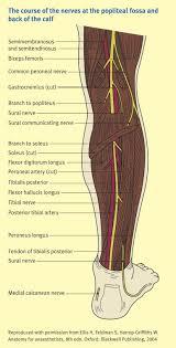 Foot Anatomy Nerves The Nerves Of The Leg And Foot