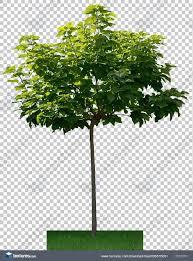trees0058 free background texture tree leaves alpha masked