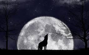 imagenes de fondo de pantalla lobos luna fondo de pantalla 1280x1024 lobos fondos de pantalla gratis