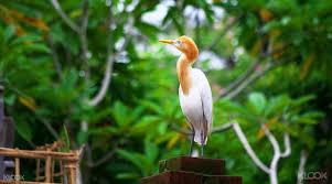 bali bird park klook