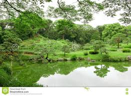 green plant tree and lake in japanese zen garden stock photo