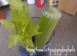 celery and food coloring science experiment fspdt