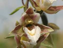 What Is An Orchid Flower - the nature of orchids
