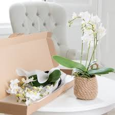 Orchid Plants Orchid Plant Pink U0026 Blue Orchid Plants Blossoming Gifts