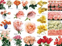 Colored Roses Colorful Rose Images Free Stock Photos Download 8 010 Free Stock