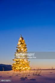 lighted christmas tree in forest of snow covered trees in winter