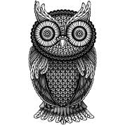 nocturnal owl lessons tes teach