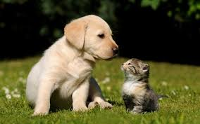 kitten and puppy wallpapers group 69