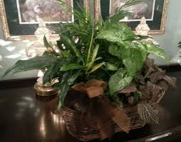 Peace Lily How To Care For Peace Lilies 15 Steps With Pictures Wikihow