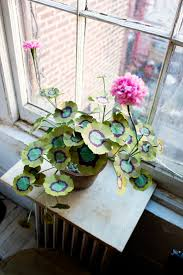 best 25 variegated plants ideas on pinterest purple shamrock