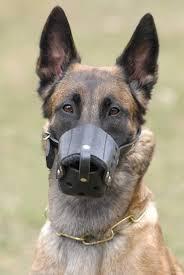 belgian sheepdog craigslist everyday belgian malinois leather dog muzzle m71 1079 dog muzzle