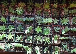 top ten low light terrarium plants pistils nursery