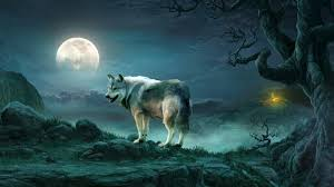 wolf the moon wallpaper wallpaper